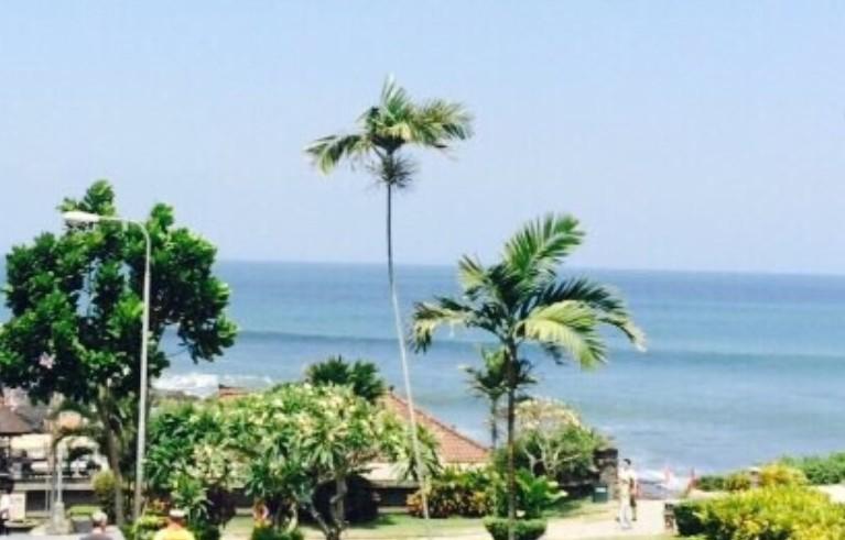 ココナッツ・ヤシの木